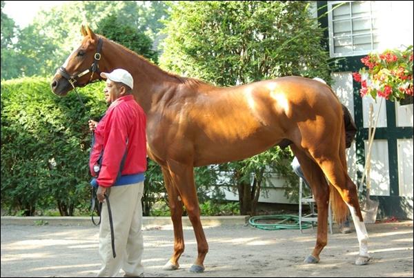 Paroda : Proporcingiausias žirgas. REGISTRACIJA Summer10