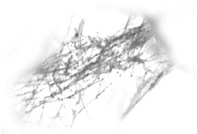 Toiles d'Araignés 0311