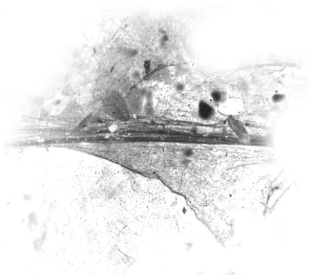 Toiles d'Araignés 0511