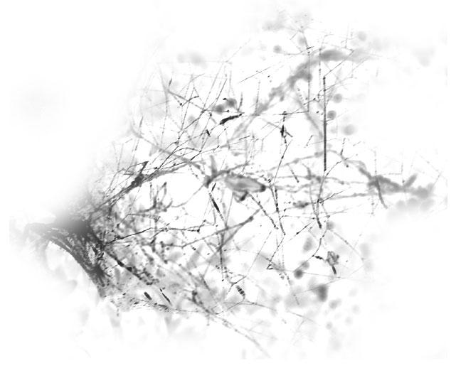Toiles d'Araignés 0612