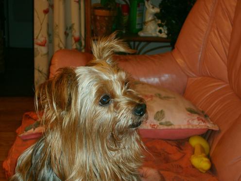 Mon petit chien Toujou10