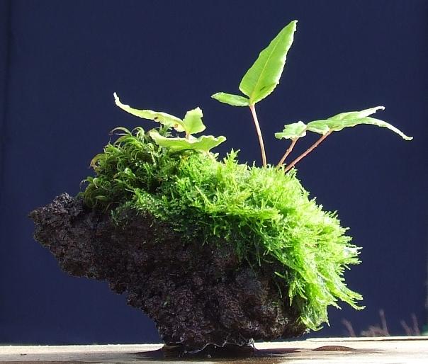 how do your kusamono grow? Dscf1415