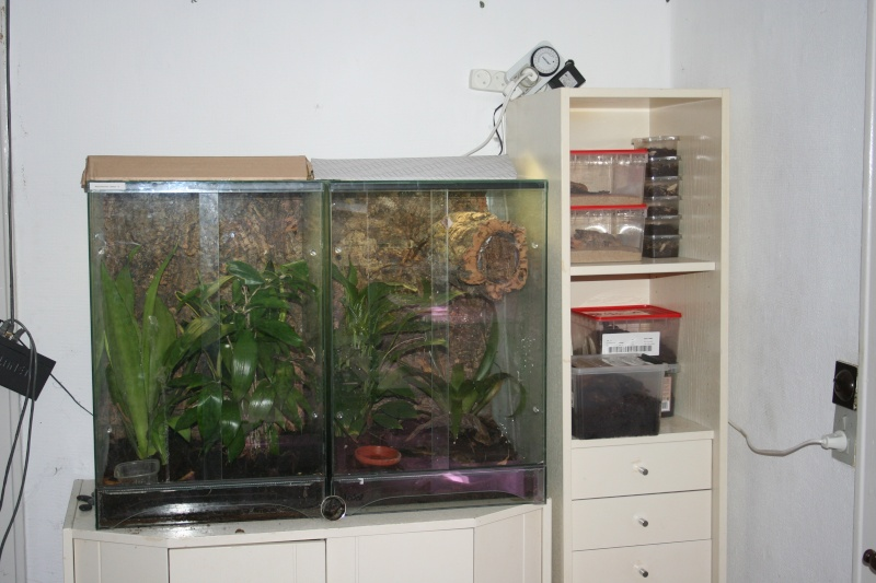 [Sharing] Show Off Your Enclosures - Page 2 Img_1712