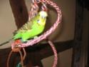JEUX et LIEUX FAVORIS de nos oiseaux Nac_0021