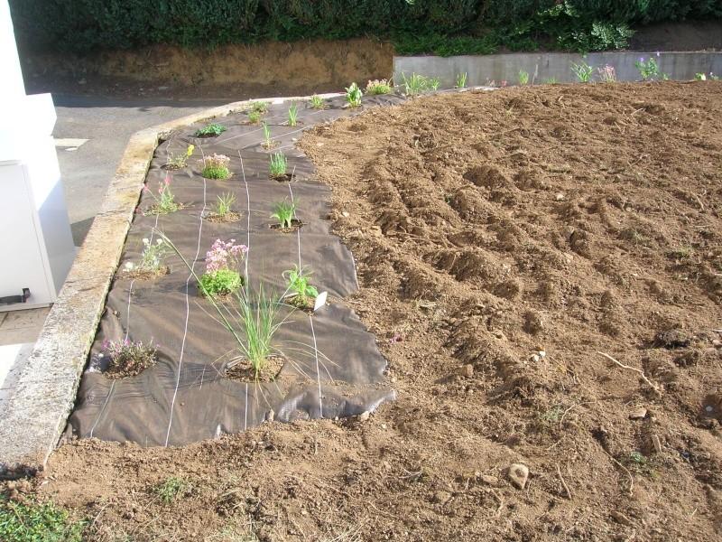 petit jardin de ville à Quimper (finistère sud ) Dscn1102