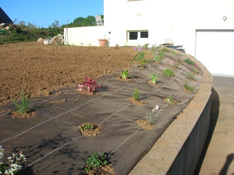 petit jardin de ville à Quimper (finistère sud ) Dscn1103