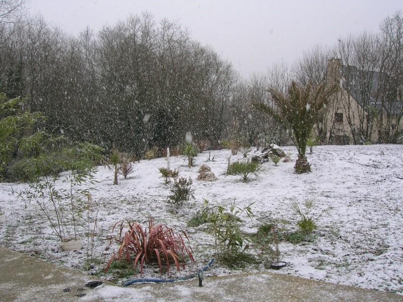 Un hiver + froid dans le Finistère. Dscn1322