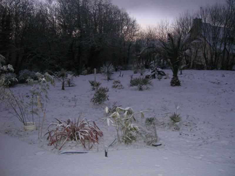 Un hiver + froid dans le Finistère. Dscn1324