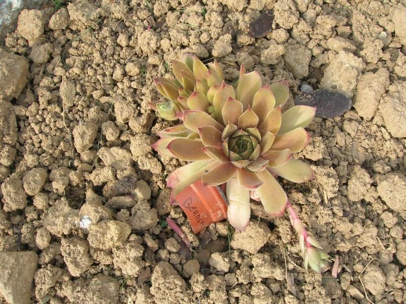 J'ai craqué sur cette plantes. Dscn1943
