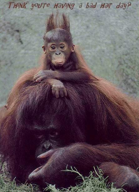 the funyest animal album Badhai10