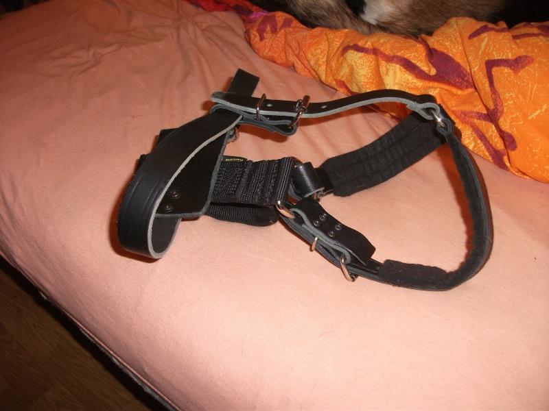 a vendre harnais en cuir Dscf2130
