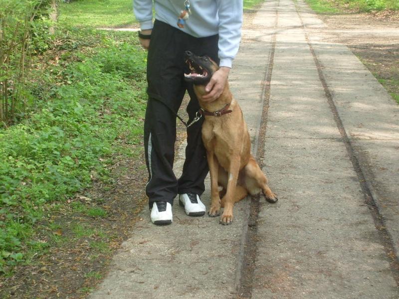 histoires de loups, les adoptes sur le forum Taiga S7302152