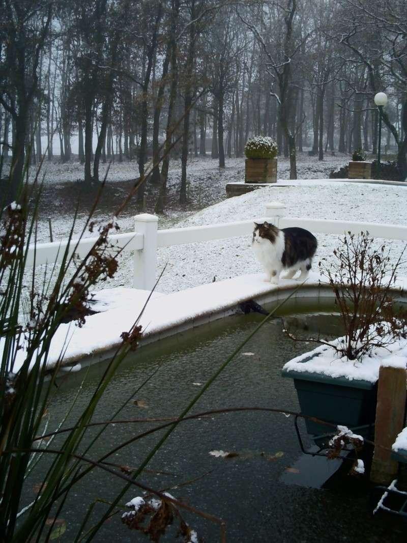 bassin l'hiver Pict0079