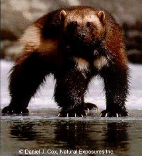 X-Men Le Origini: Wolverine Wolver10