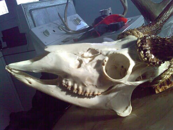 sans chair juste de l'os T10