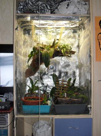 Armoire plantes épiphytes (Orchidées et Tillandsias) 02_11_11