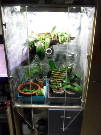 Armoire plantes épiphytes (Orchidées et Tillandsias) 02_11_12