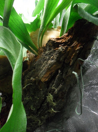 Armoire plantes épiphytes (Orchidées et Tillandsias) 20_11_11