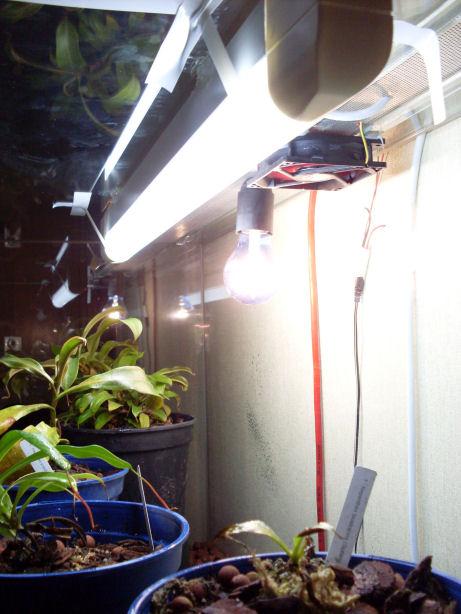 Mon terrarium de 120x50x60 210