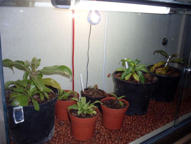 Mon terrarium de 120x50x60 216
