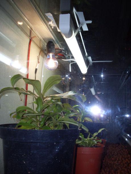Mon terrarium de 120x50x60 314