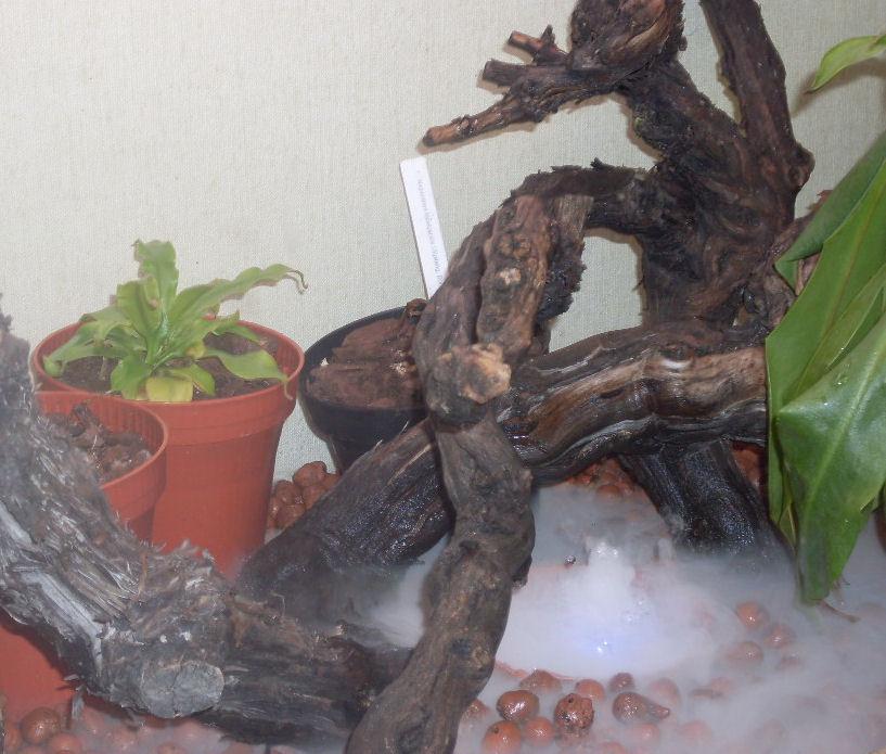 Mon terrarium de 120x50x60 B10