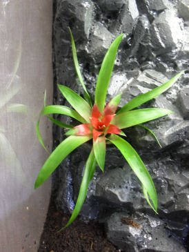 Terra-biotope /--> Projet Dendrobates/PCs Brmo_c10