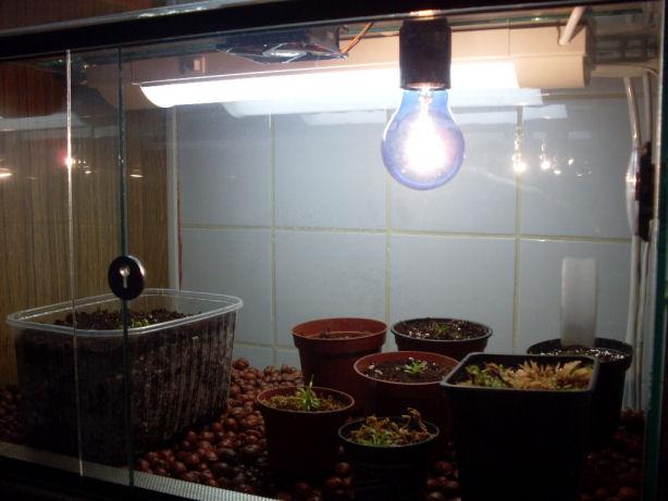 éclairage petit terrarium Sdc10012