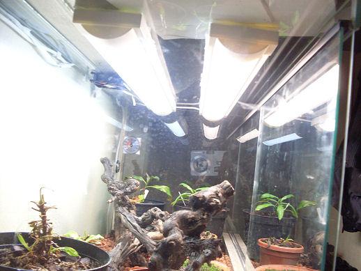 Mon terrarium de 120x50x60 Sdc10410