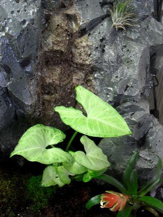 Terra-biotope /--> Projet Dendrobates/PCs Sdc12414