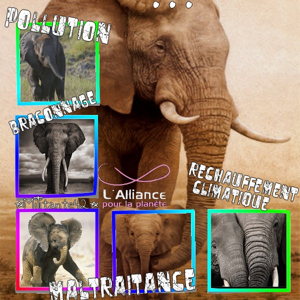 Mes petits montages Elepha10