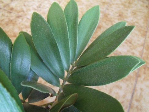 Quelle est le nom de cette plante Dscf0311