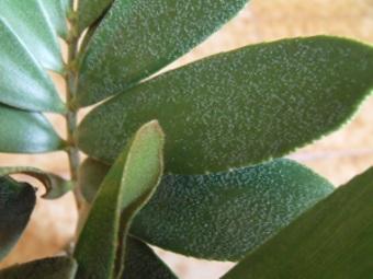 Quelle est le nom de cette plante Dscf0312