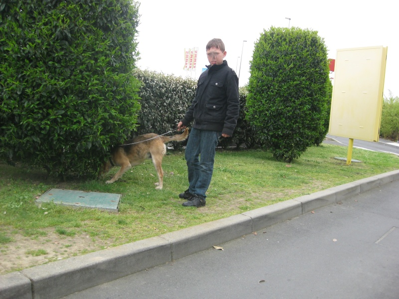 EURO, beagle mâle, environ 2 ans (79) Img_4510