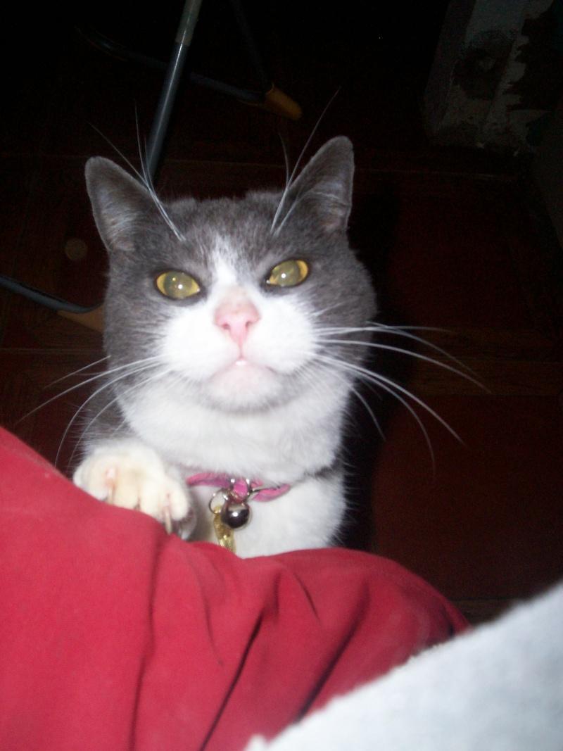 Pour les amoureux des chats Divers13