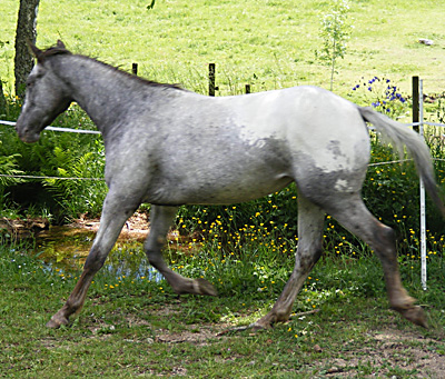 poulinières quarter horse Poul210