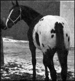 photo de chevaux fondations - Page 4 Sbtoby14