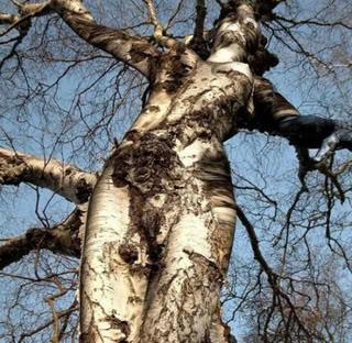 Sculptures naturelles ou œuvres de la nature - Page 2 Tree-g10