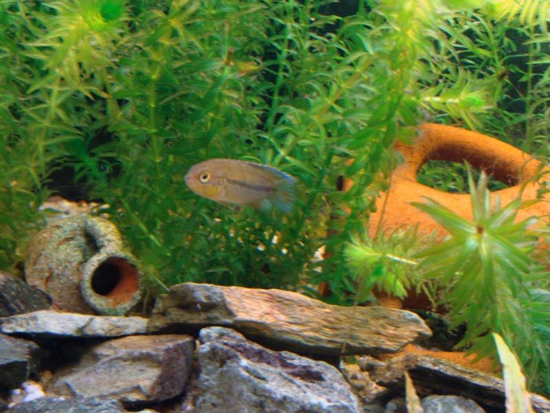 l aquarium de kdfred 200litres - Page 3 Annaca10