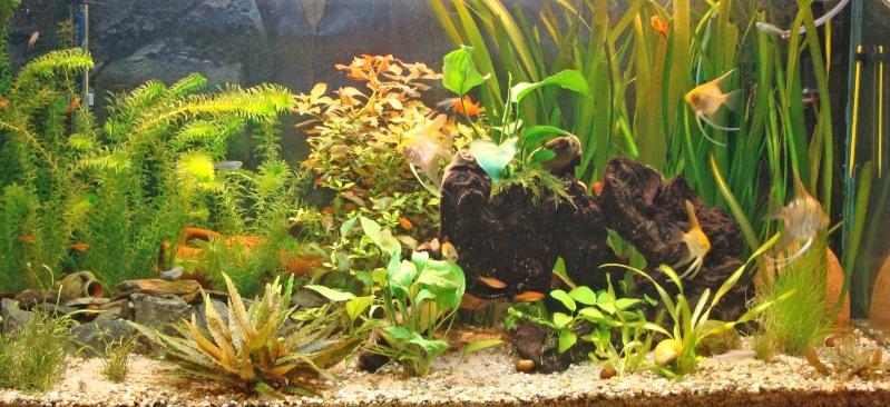 l aquarium de kdfred 200litres - Page 3 Aquari10