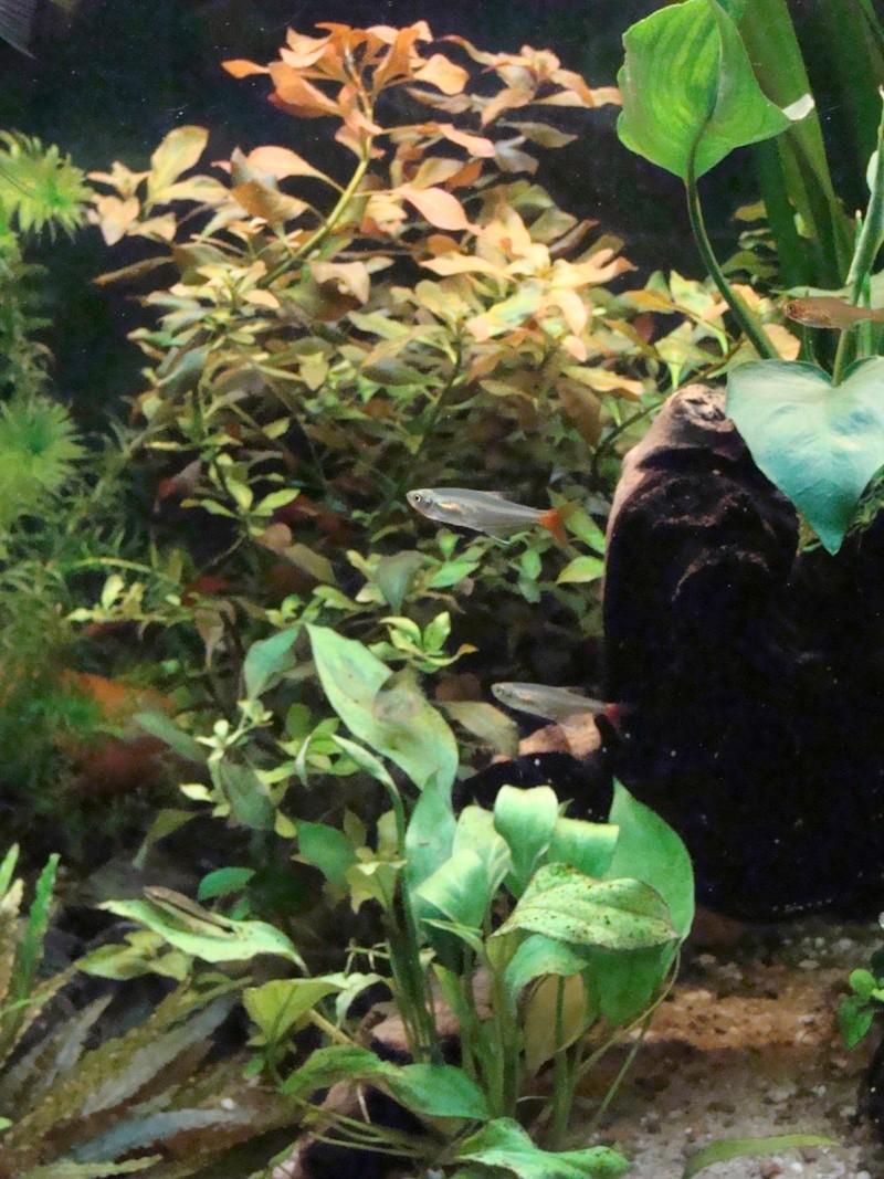 l aquarium de kdfred 200litres - Page 3 Aquari12
