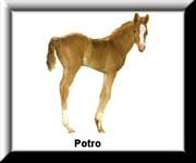 O Ciclo de Vida do Cavalo 110