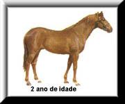 O Ciclo de Vida do Cavalo 310