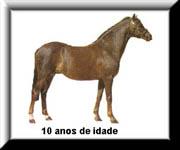 O Ciclo de Vida do Cavalo 410