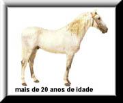 O Ciclo de Vida do Cavalo 510