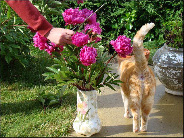 fête des mères, dites le avec des fleurs Dsc02537