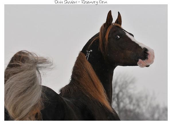 les chevaux.. - Page 4 Divin_10