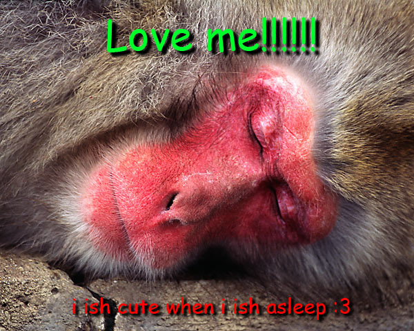 Funny pictures - Page 3 Monkey10