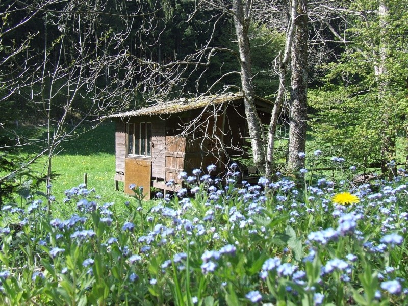 cabane des fleurs Dscf0010