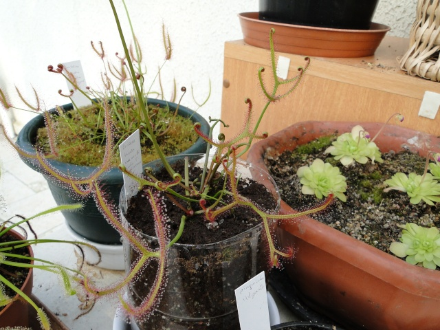 Mes plantes. (ça se réveille aussi du côté de Nantes...) Dsc01113